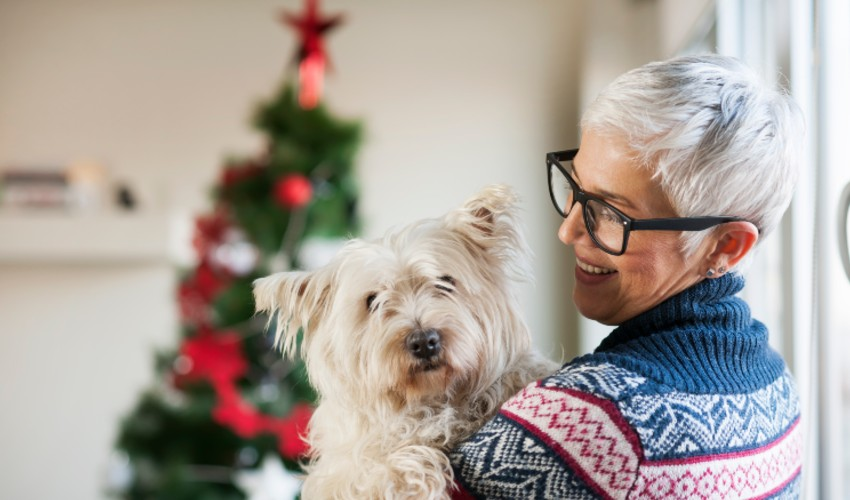 Senior woman at home with her dog at Christmas time.